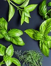 Ervas aromáticas e salicórnia