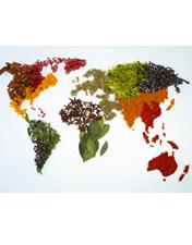 Intervenção Nutricional na desnutrição associada à doença